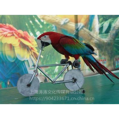 2019网红百鸟展一手资源专业百鸟展饲养大型网红百鸟展出售