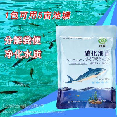 水族锦鲤鱼缸通用净水剂养水浓缩益生菌干粉污水处理菌种硝化细菌
