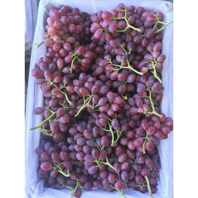 葡萄专用膨果增甜剂 增甜着色