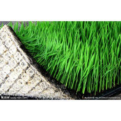 黑龙江有机水稻育苗专用产品-光动力生态光碳核肥