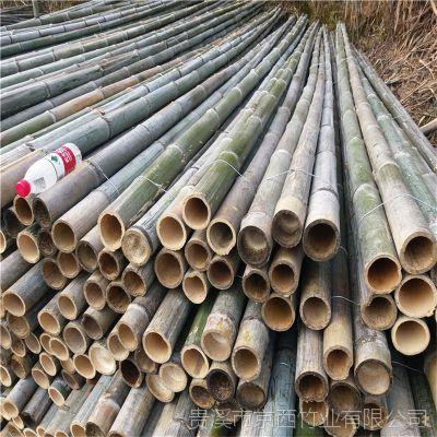 大量供应5米6米粗竹竿 搭蘑菇架子用的毛竹尾、竹梢子 源头资源 江西发货