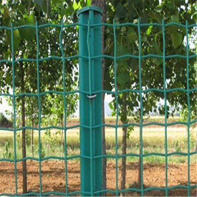 绿色铁丝网 包塑荷兰网 围栏网价格