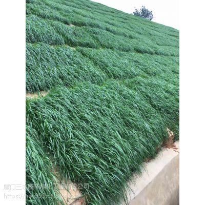 昆明市寻甸县护坡草籽黑麦草多少钱一斤?