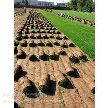 东营草坪|济南草皮|大同草坪