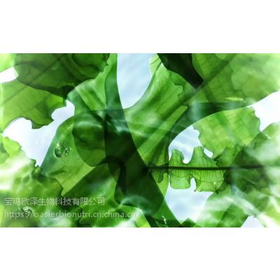 欧泽海藻提取物