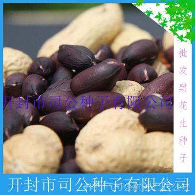 批发粮食作物种子种苗 花生种子 黑富硒黑花生种子 带壳黑花生