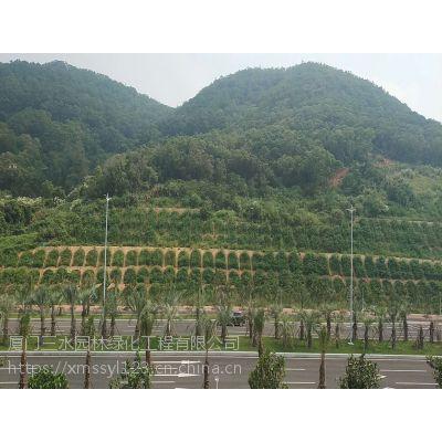 提供自贡高速护坡灌木种子绿化作用