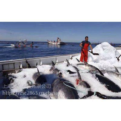 西班牙蓝鳍金枪鱼进口清关代理