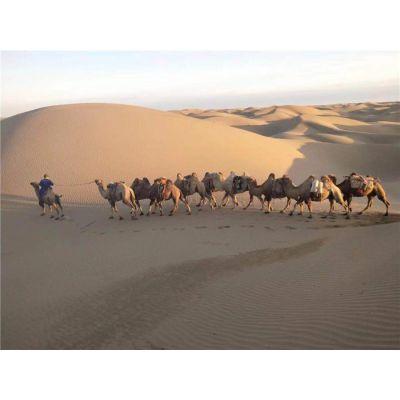 宁夏沙漠穿越-沙漠穿越哪家好-经年凌峰旅游(推荐商家)