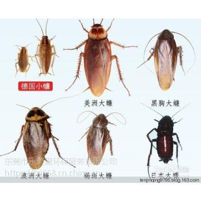 东莞东城家庭环保灭蟑螂,无毒无味,对老人,儿童,孕妇无影响,质保时间长