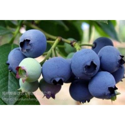 10kg桶装磷酸二氢钾蓝莓膨果冲施磷酸二氢钾好处多