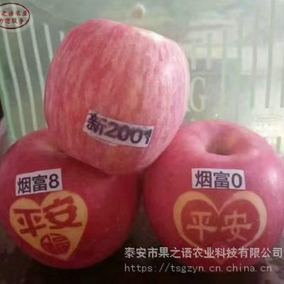 新品种桃树苗:澳洲红桃苗、澳洲红桃苗品种怎么样