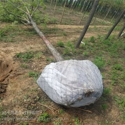 首次降价促销树根网,包树根铁丝网,包土球铁丝网