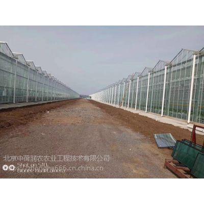 中荷润农专业打造高标准设施农业