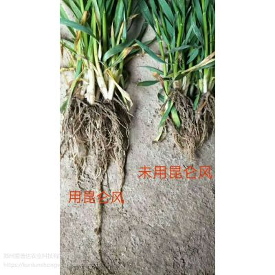 昆仑风小麦套餐小麦返青肥增加根系活力返青快
