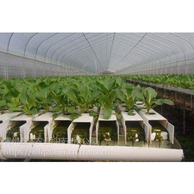薄膜无土栽培蔬菜温室 薄膜温室建多高合适