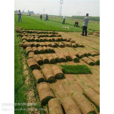 出售草坪|混播高羊茅草皮报价