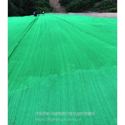 供应防航拍伪装网绿化工地道路护坡盖土网厂矿工厂塑料网