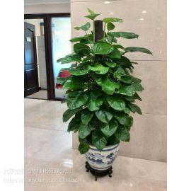 办公室花卉租赁北京花卉租赁公司