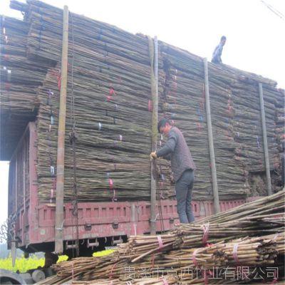 现货供应2.5米、3米菜架竹竹竿