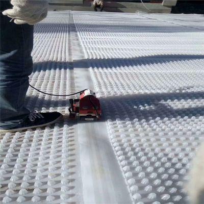 塑料排水板价格 凸高20mm聚乙烯耐根穿刺