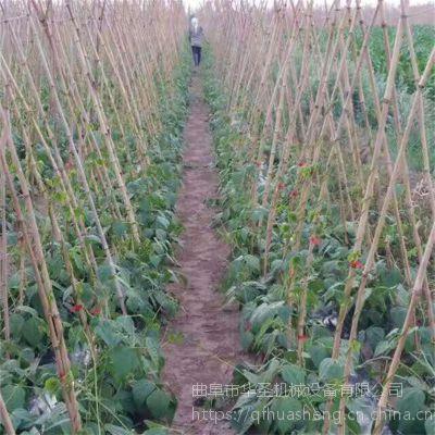 圣女果番茄绑蔓器 蔬菜优质绑枝机