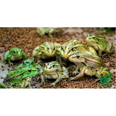青蛙养殖怎么预防疾病