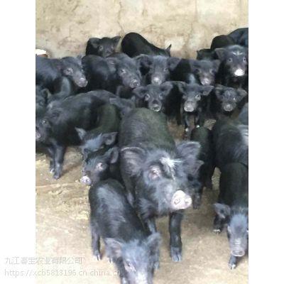 山东济南市有藏香猪养殖场吗