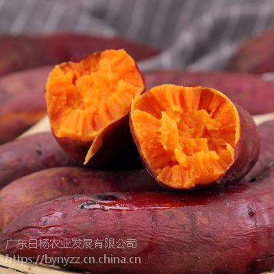 西瓜红红薯 平价批发 全年供货 绿色无公害
