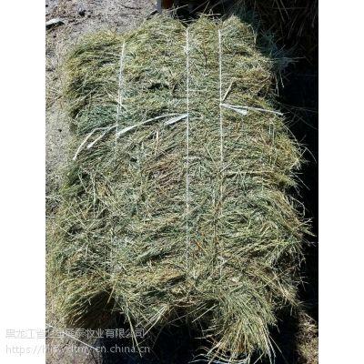 安达羊草 羊碱草,羊胡子草 谷草