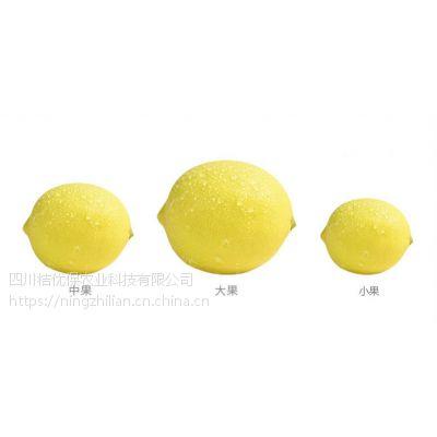 安岳柠之恋,优越柠檬,各种各类一级二级柠檬大果供应