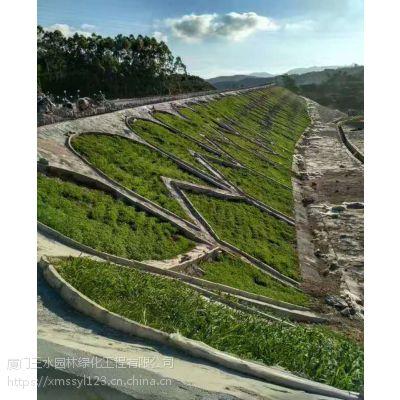 三水园林专供成都草种狼尾草边坡绿化施工工艺