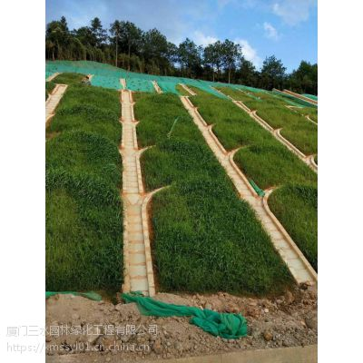铜仁边坡绿化混合种子混狗牙根要下多少克