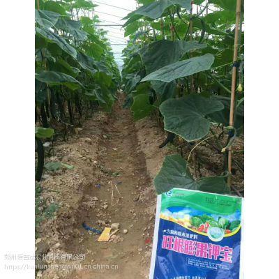 黄瓜拉直拉长叶面肥,不沾花快速膨果不伤果