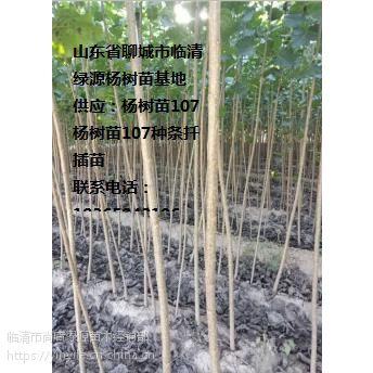 107杨树苗销售行情