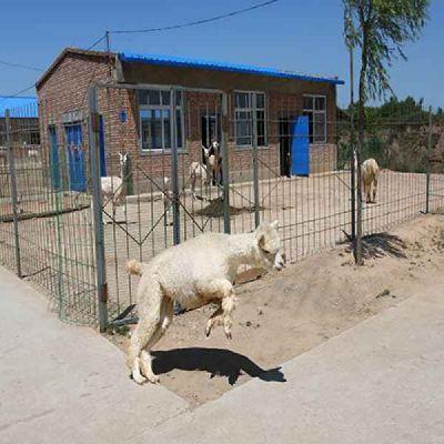南京羊驼价格