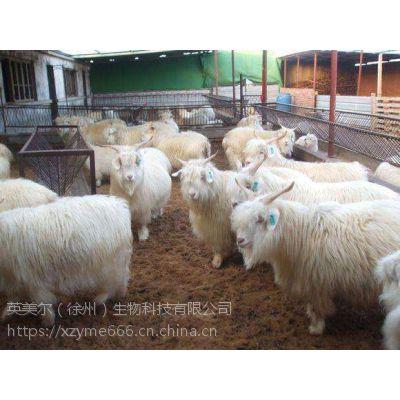 高效性肉羊浓缩饲料,肉羊浓缩料成吨订购价格