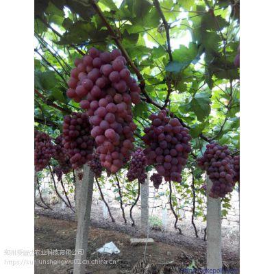 葡萄膨大剂促花保果膨大素