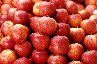苹果苗栽种的方法及注意事项