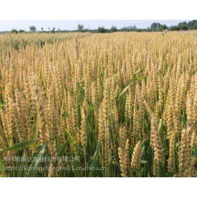 小麦高产套餐 一套一亩地