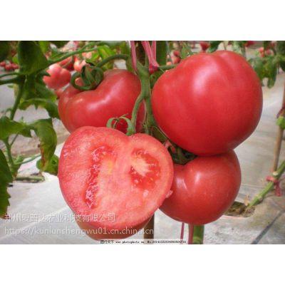 西红柿坐果膨果着色素