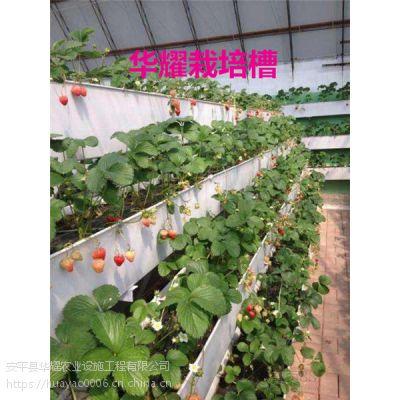 温室种植鞍山使用草莓立体种植槽|栽培槽的成本效益分析