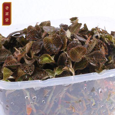 广东金线莲 特级仿野生种植金线莲 专卖店