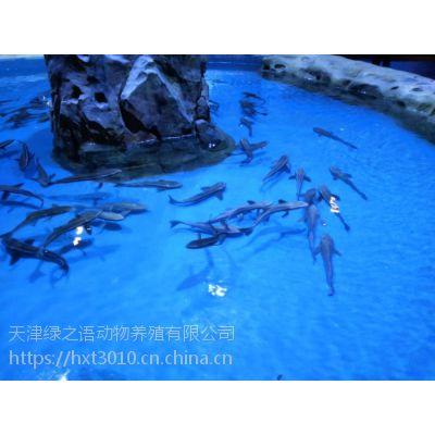 海洋馆设计,海底世界筹建,水族馆建设,饲养箱设计,极地海洋世界承建,海洋动物出售