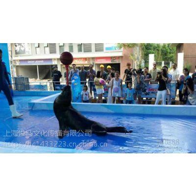 火爆海狮表演海洋展租赁海狮表演厂家有档期
