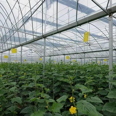 贵州安顺薄膜连栋蔬菜温室生产商/安顺薄膜连栋温室报价多少