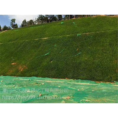 专业批发云南省边坡绿化护坡草种