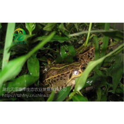 湖北人工养殖青蛙发展前景如何?