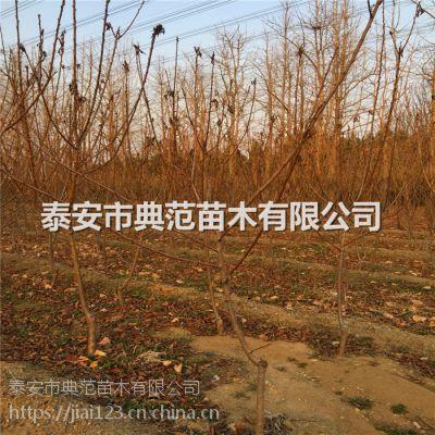 蓝蜜李子苗多少钱一棵 蓝蜜李子苗品种介绍