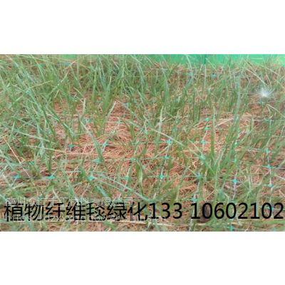 生态植被毯 河道绿化椰丝毯 矿上绿化治理植物生态毯